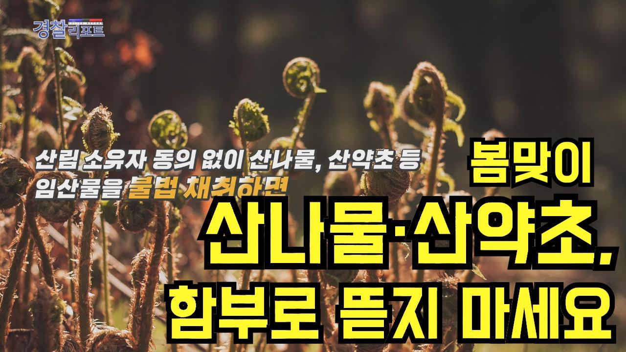 봄맞이 산나물·산약초, 함부로 뜯지 마세요_경찰리포트(2018.4.27)